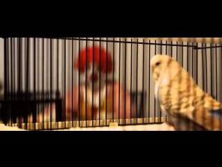 Ronald McDonald HATES FLAPPY BIRD !!!