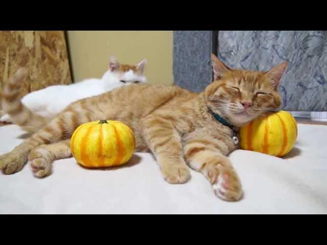 プッチーニまくら Pumpkin Pillows