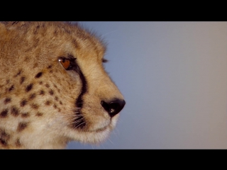 African Cats - Official Disney Nature Movie Trailer HD ...