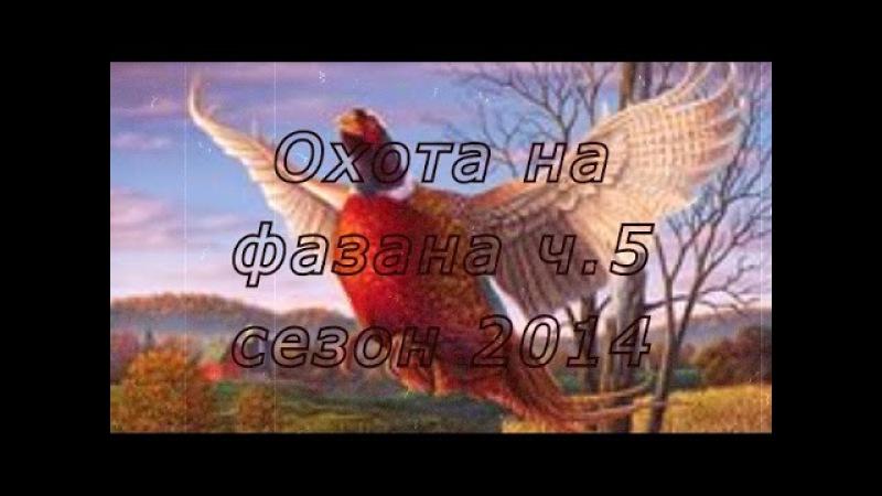 Охота на фазана с легавыми дратхаарами на Юге России Сезон 2014г Часть 5
