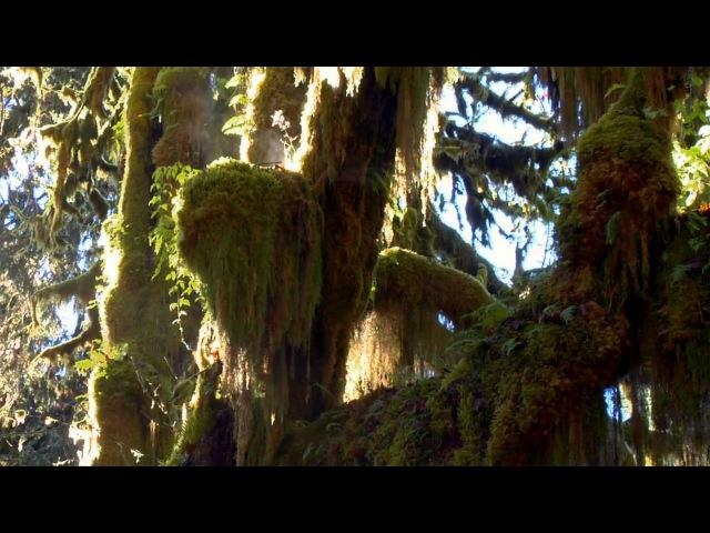 Дикая природа Аляски Wild Alaska 2011 HD
