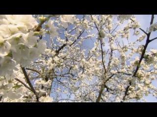 Ф. Шопен - Вальс № 3  - F. Chopin -  Waltz № 3