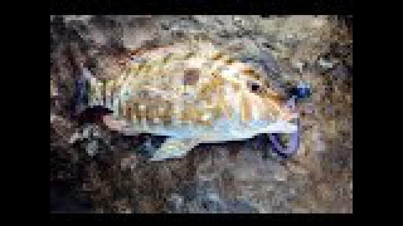 Jighead TV Basic fishing methods with softbaits
