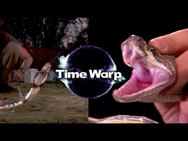 Искривление времени Гремучая змея и плюющаяся кобра