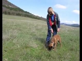 Следовая работа со щенком
