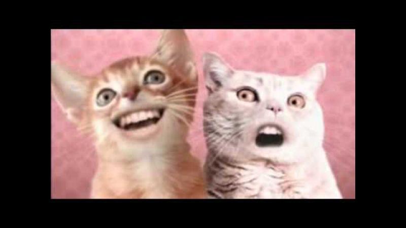 Ozone Cats Miah ha hi D