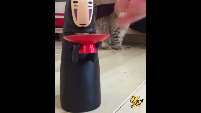 Ese gato esta super sorprendido
