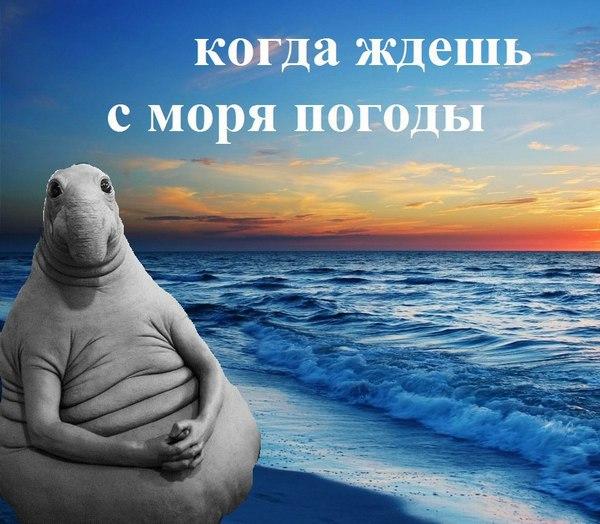 погода у моря ждет тебя картинки прощальный, звон