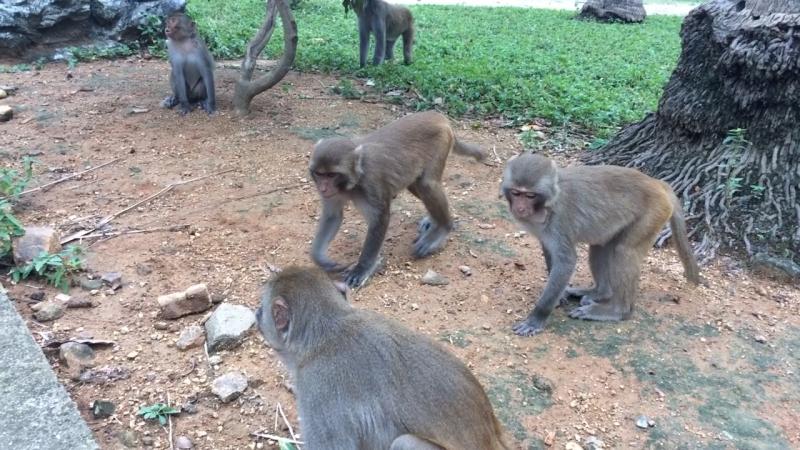 Северные острова Остров обезьян