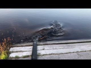 Крокодилы, Жители Флориды / inhabitants of Florida, crocodile