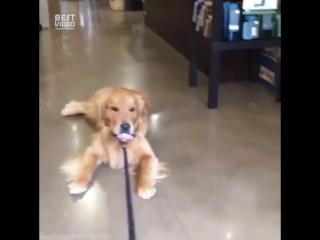 Не хочет уходить из магазина для животных