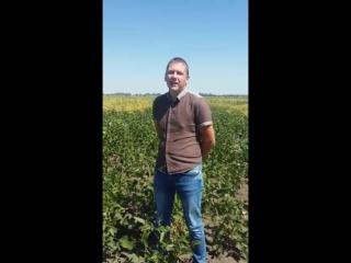 Об эффективности применения препарата Биостоп в хозяйстве Краснодарского края