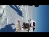 Волк притворился мёртвым и напал на охотника