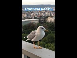 История Леонида.Варна