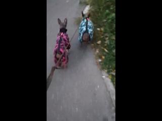 Флисовые костюмы ФМД
