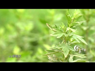 本草中华.Herbal.China.City.2017.EP06.WEB-DL.1080P.X264.AAC.Mandarin.CHS.HQC