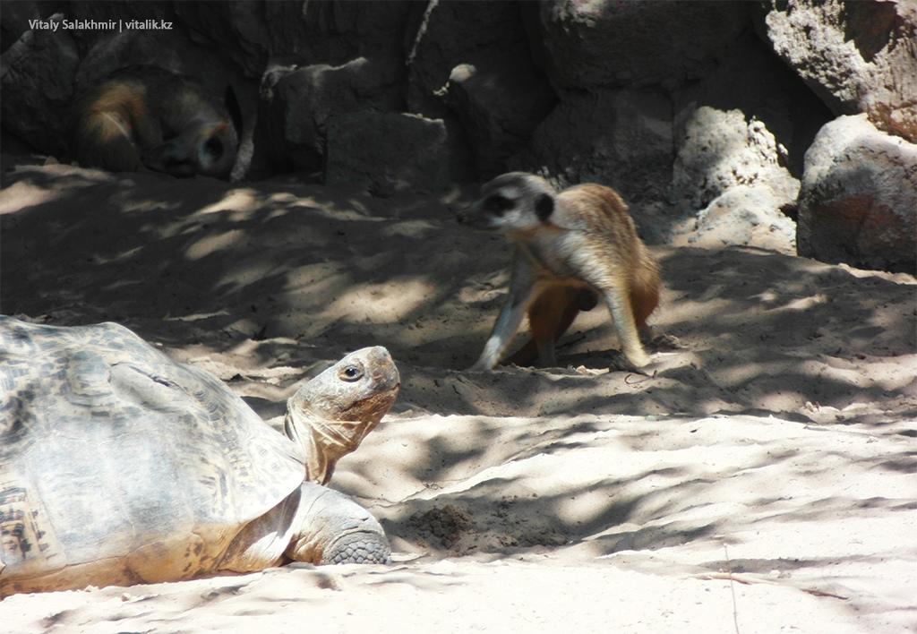 Черепахи в зоопарке Алматы 2018