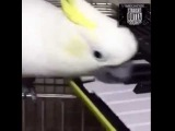 Bird plays A Thousand Miles by Vanessa Carlton