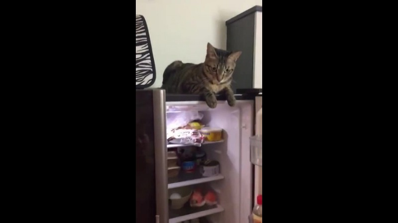 Cat refuses to let fridge door close