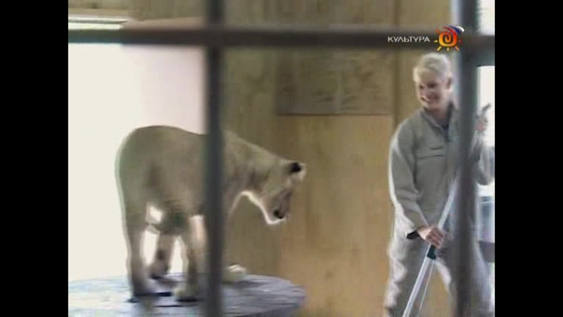 Animal Planet. Человек и львы (1-3 сезоны: 1-43 серии из 43) / The Lion Man / 2004-2008 /12