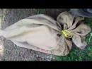 麻袋綁架案1 Bag Kidnapping
