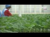 Тепличное овощеводство в Подмосковье