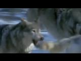 Лакмус - Человек человеку волк (
