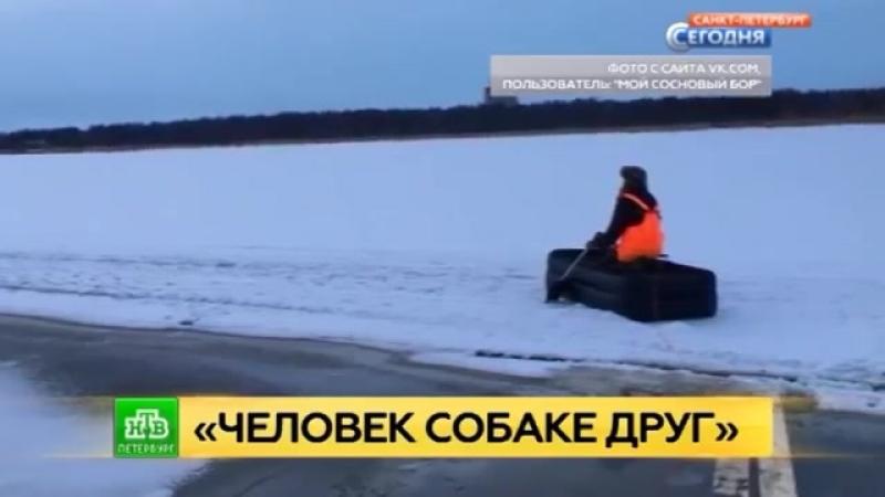 Спасение собаки в Финском заливе. Дрейфовавшую на льду Финского залива собаку спасли с помощью надувного матраса.