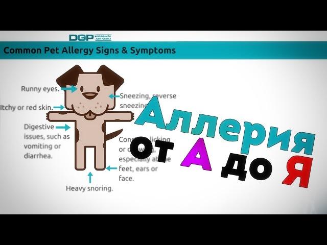 Аллергия от А до Я. Вебинар по дерматологии