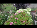 03.10.17г. Пробежка по саду. Осенние краски.