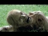 Cranberries - Zombie ¦ Diana Bisnette  Точка Z - Зомби