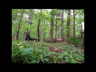Работа в лесу, свободный поиск с собакой, работа помощника после сигнала на отзыв, собака зависает.