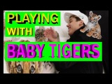 PLAYING WITH BABY TIGERS!