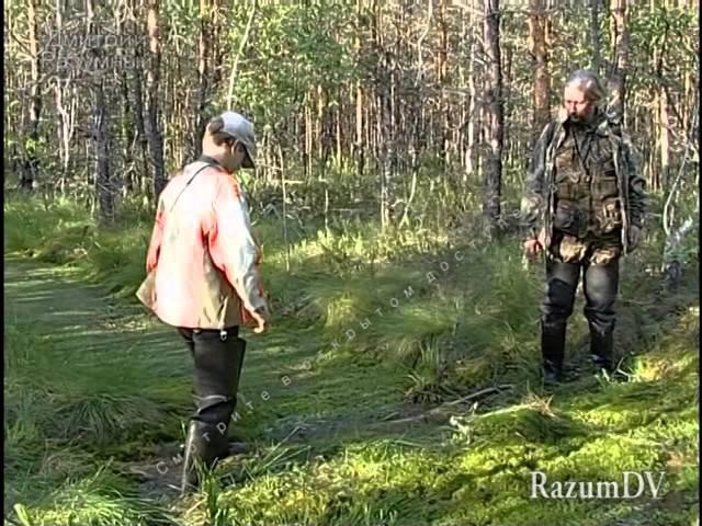Опасности в природе Осторожно болото