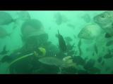 Погружение с аквалангом в черное море.