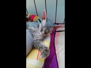 засып