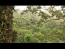Rain in Amazon Rain Tropical Forest Canopy. Дождь в дождевом лесу, Амазония 1924sp