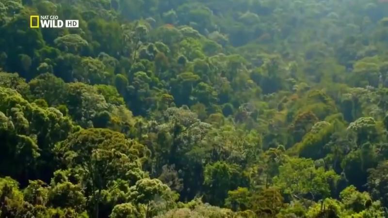 Классный фильм. Шри-Ланка. Дикая природа. National Geographic.
