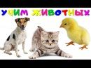 Учим Домашних Животных 🐶 Голоса и Звуки Животных Для Детей 🐷 Как Говорят Животные