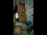 Моя кошка не любит, когда её целуют.