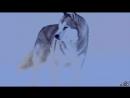 Белый плен_Full-HD