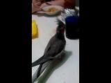 Мой попугай Ксюша