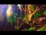 Zhi-Vago - Teardrops From Heaven