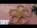 Флэшмоб на Всемирном фестивале молодежи и студентов