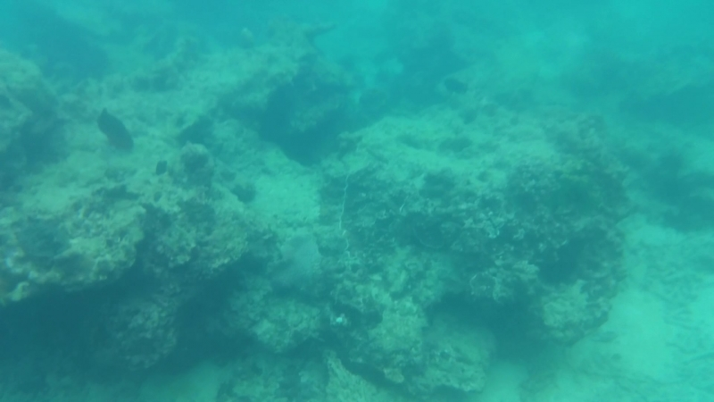 Snorkeling ))