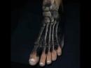 Идеи татуировок (Eliot Kohek )