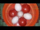 Youtube Village Food Recipe   Eggs With Tomatoes Prepared In My Village   Grandmother Recipes 83