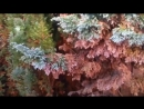 Chemtrails killing my trees Wolverhampton UK WV10