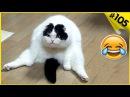 Смешные кошки приколы про кошек с котами 2017 105 Топовая подборка с котами