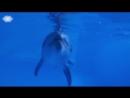 Центр плавания с дельфинами.